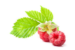 Two raspberry Royalty Free Stock Photo