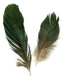 Two raven feathers Royalty Free Stock Photos