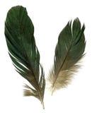Two raven feathers Royalty Free Stock Photos