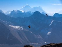 Two ravens flying thermals, Mt Everest back-lit on horizon stock photo