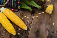 Two raw corn without leaves on dark wood table with empty place Stock Photography