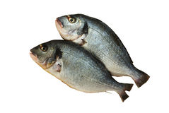 Two raw denis fishes isolated on white Royalty Free Stock Photography