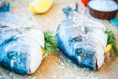 Two raw dorada fishes with lemon, dill and sea salt Stock Photography