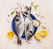 Two raw dorado fish in blue plate with spoon,lemon,herb and spices Royalty Free Stock Photos