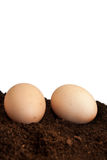 Two raw eggs on the soil and white background Royalty Free Stock Image