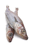 Two raw fish Royalty Free Stock Photos