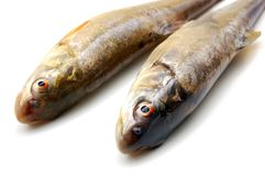 Two raw fish Stock Image