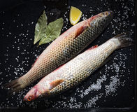Two raw fish with lemon and salt on a black background Stock Photos