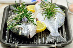 Fishes. Uncooked gilt head sea bream fishes with condiments on bbq grill.Mediterranean seafood cuisine royalty free stock photos