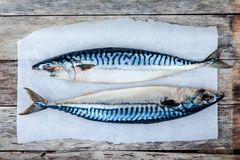 Two raw fresh mackerel fishes on a paper. On wooden table Stock Photos