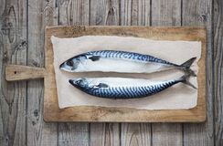 Two raw fresh mackerel fishes on a paper on wooden table. Two raw fresh mackerel fishes on a paper  old wooden table Stock Photography