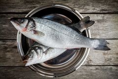Two raw fresh sea bass in a bowl on wooden table Stock Photos