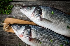 Two raw fresh sea bass closeup on a rustic wooden table Royalty Free Stock Images