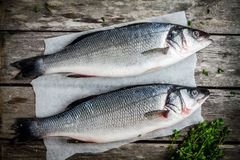 Two raw fresh seabass with thyme Stock Image