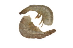 Two Raw King Shrimps Laying In Row Isolated On White Royalty Free Stock Photos