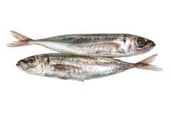 Two raw mackerel. Stock Photo