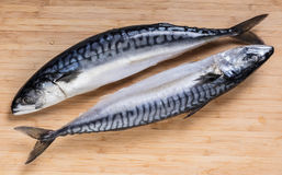 Two raw mackerel fish. On a wooden background Royalty Free Stock Images