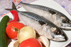 Two raw mackerels Stock Photos