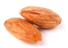 Two raw peeled almonds close up macro Stock Photos