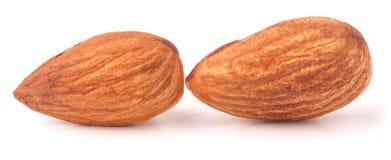 Two raw peeled almonds close up macro Royalty Free Stock Photos