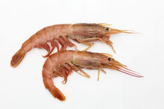 Two raw prawns Royalty Free Stock Photography