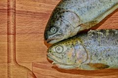 Two raw rainbow trouts on wooden board. Healthy food and dieting concept. Add dark contrasts. Close-up.  Royalty Free Stock Image