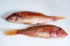 Two raw red fishes Royalty Free Stock Photography