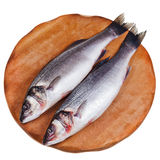 Two raw sea bass Stock Photography