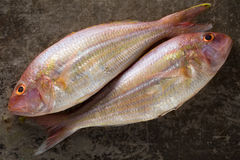Two Raw Sea bream fishes on metal background, top view Stock Photo
