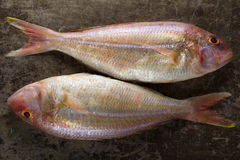Two Raw Sea bream fishes on metal background, top view Royalty Free Stock Images