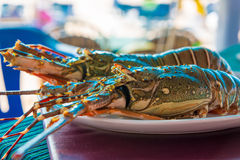 Two raw sea lobster Stock Photo