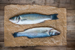 Two raw seabass fish on wooden background Stock Photography