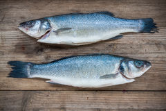 Two raw seabass fish on wooden background Royalty Free Stock Images