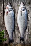 Two raw seabass with fresh thyme on wooden table Stock Image