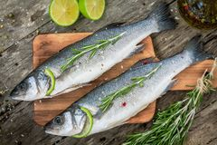 Two raw seabass with lime and rosemary Stock Photography