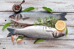 Two raw seabass with spices Royalty Free Stock Photography
