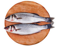 Two raw seabass on wooden board Stock Photo