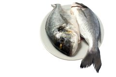 Two raw fresh dorada on the plate stock photos
