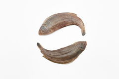 Two raw sole fishes on white background Royalty Free Stock Image
