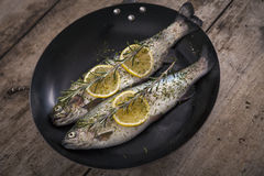 Two raw trouts fish on the baking dish Royalty Free Stock Images