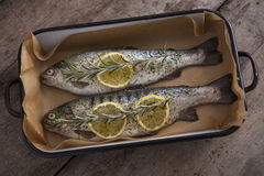 Two raw trouts fish on the baking dish Stock Images