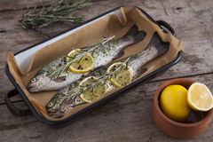 Two raw trouts fish on the baking dish Royalty Free Stock Image