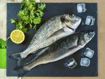 Two ready to cook raw fish with lemon on stone slate board. Royalty Free Stock Images