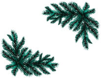Two realistic branch blue spruce. Placed in the corners. Fir branches. Isolated on white background. Christmas Stock Image