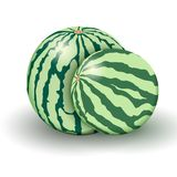 Two realistic watermelons from new harvest isolated on a white background. Stock Photos