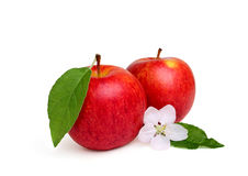 Two red apple with apple flower. Stock Photography