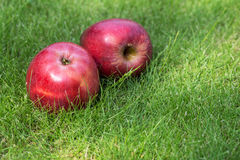 Two red apples on green grass. Two ripe red apples lying side by side on green grass with copyspace conceptual of a healthy diet stock photo