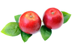 Two red apples with leaf Royalty Free Stock Image