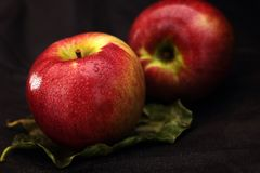 Two red apples on a leaf. And a black background royalty free stock photos