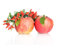 Two red apples with leaves and barberry Stock Photos
